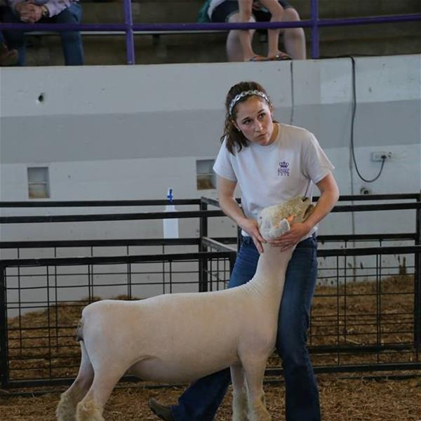 Holly Wolfe with her Southdown Lamb in the Experienced Sheep Showman Category