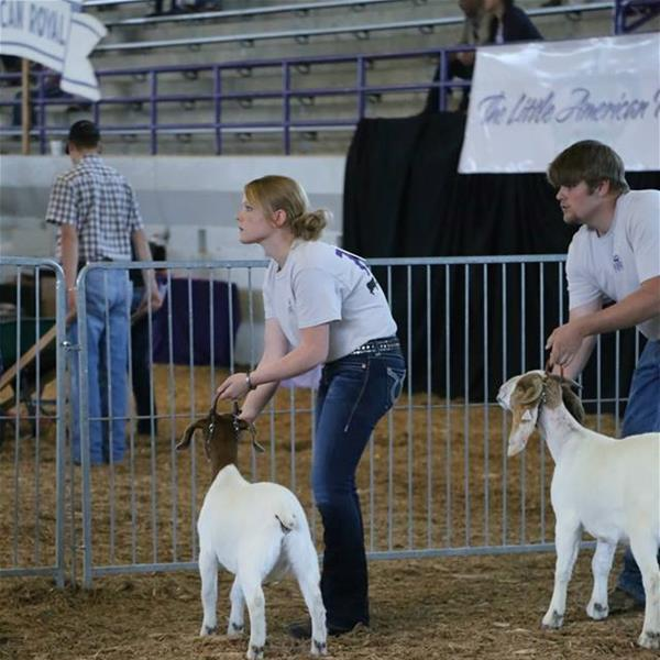 Morgan Wiedenhoeft watches the judge during the Novice Goat Showman Class.