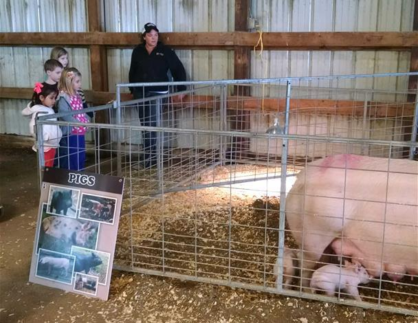 Block and Bridle Member, Ally Franklin, teaching a group of kids about pigs.